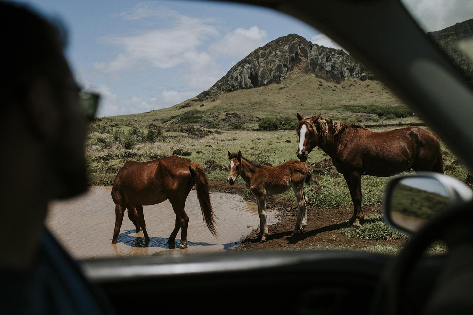 konji ivana varesko